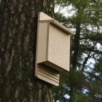 Bat Box Building: A Hands-on Workshop