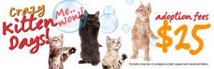 Crazy Kitten Days!