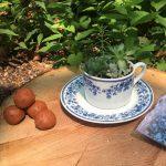 Gifts from the Garden – A Children's Workshop at Jenkins Arboretum & Gardens