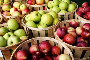 Harriton House Autumn Apple Tasting