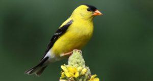 Beyond The Birdfeeder: What Birds Are Really Looki...