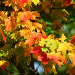 Hiking with MLSN & Radnor Conservancy: Fall Foliage