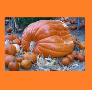 Pumpkin Playground at Longwood Gardens