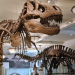 From Dinosaurs to Outer Space: NYC American Museum of Natural History