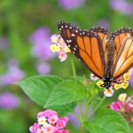 Creating Gardens that Attract Birds and Butterflies