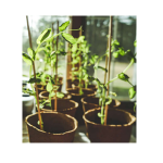 Roots, shoots, seed and leaves – planting for kids