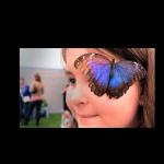 Butterflies Live! at The Philadelphia Flower Show