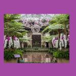 Longwood Gardens Orchid Extravaganza!