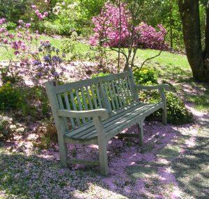 Wednesday Walkabouts at Jenkins Arboretum & Ga...