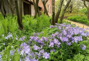 Spring Garden Walk