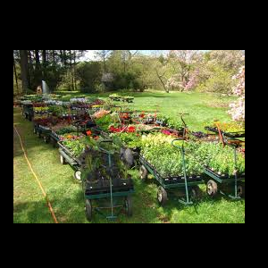 Annual Plant Sale: Remarkable Rhododendrons & ...