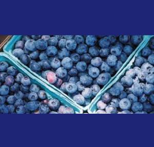 Linvilla Blueberry Festival