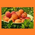 Linvilla Peach Festival