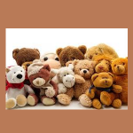 Stuffed Animal Workshop