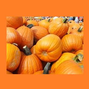 East Goshen Pumpkin Fest