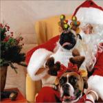 Pet Photos With Santa 2019