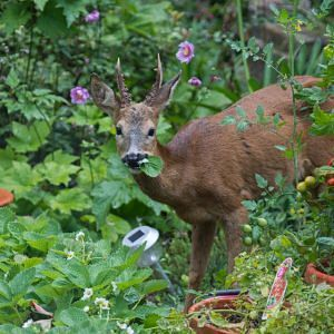 EVENT CANCELLED -Gardening in Deer Country