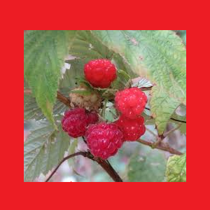 Grow Your Berry Best