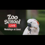 Elmwood Park Zoo School