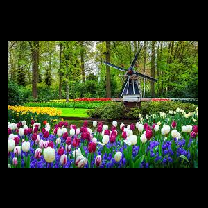 Virtual Tour of Keukenhof in Amsterdam, Holland