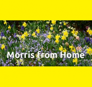 Morris Arboretum Virtual Garden Tours and Activiti...