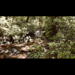 Sense-able Classrooms: Streamside Forest and Herbal Gardens