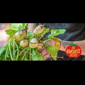 Harvest 2020 - Grow & Share