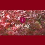 Shofuso Japanese Garden Re-opening