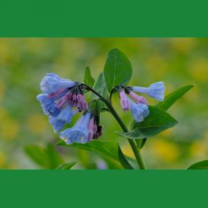 Volunteer – Spring Gardening