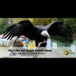 FLY LIKE AN EAGLE Charity Event