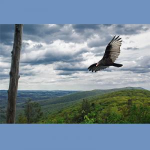 Spring Migration Hawk Watch
