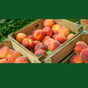 Peach Festival & Sidewalk Sale