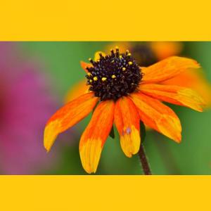 Volunteer – Summer Gardening