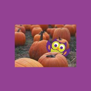 Ollie Owl's Great Pumpkin Quest